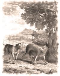 Il cane e il lupo