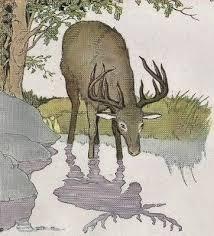 il cervo alla fonte